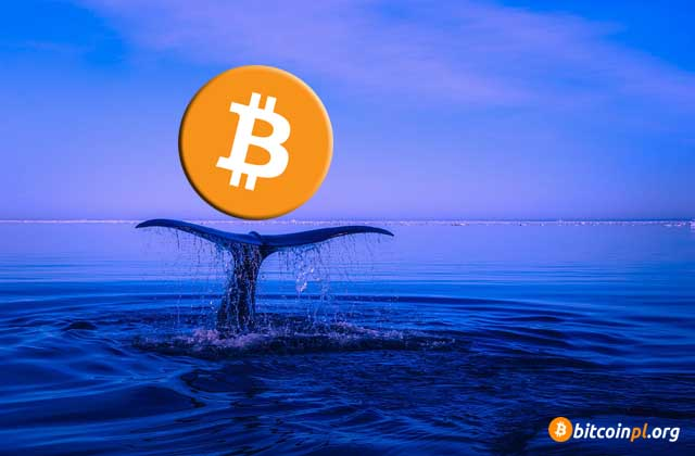 whale-bitcoin